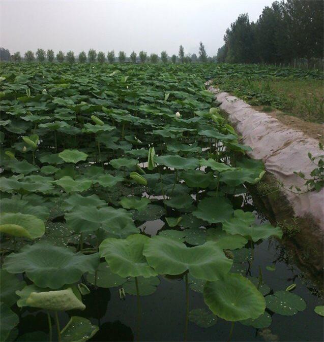 藕池复合土工布