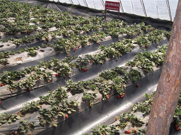 温室大棚防草布