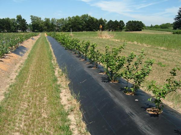 果树地布怎么铺才正确 果树防草布怎么铺设